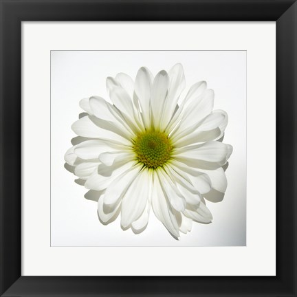 Framed White Daisy Print