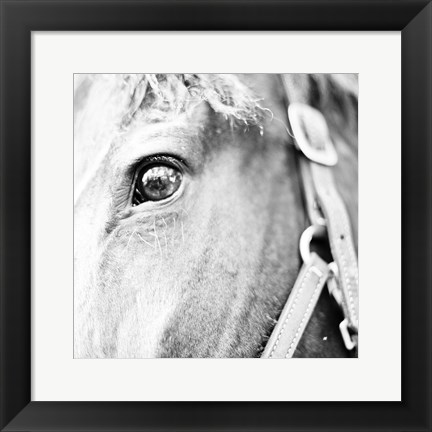 Framed In the Stable I Print