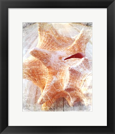 Framed Conch I Print