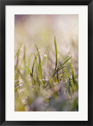 Framed Soft Morning Dew I Print