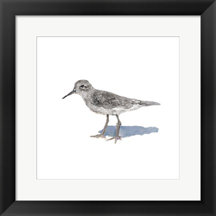Framed Sandpiper on White II Print