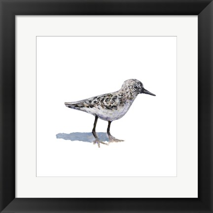 Framed Sandpiper on White I Print