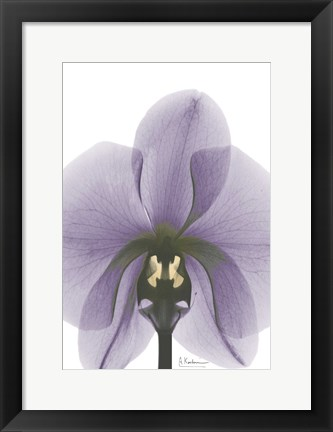 Framed Purple Orchid A29 Print