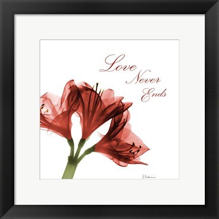 Framed Amaryllis Quote Print
