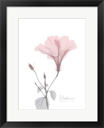 Framed Hibiscus B49 Pink Print