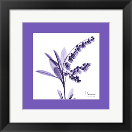 Framed Lily Of The Valley Bordered Print