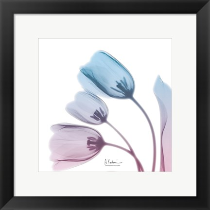 Framed Soft Tulips Rose Serenity Print