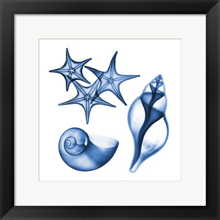 Framed Blue Shells Three Print