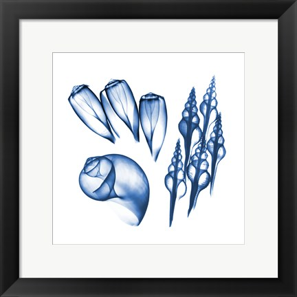 Framed Blue Shells Five Print