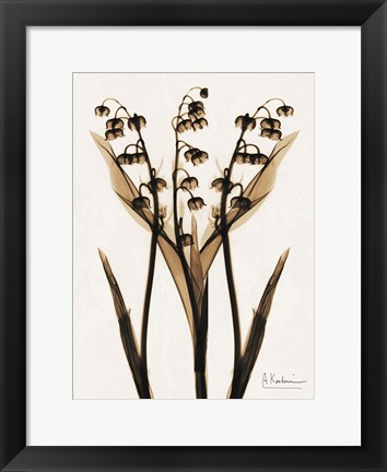 Framed Lily Of The Valley Print