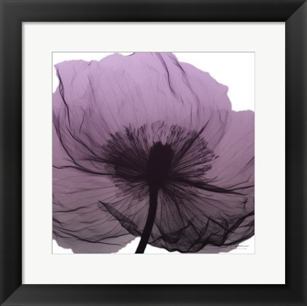 Framed Poppy Purple Print