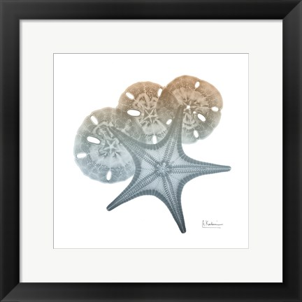 Framed Earthy Hues Starfish and Sand Dollar Print