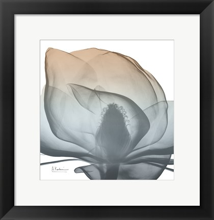 Framed Magnolia Earthy Beauty New Print
