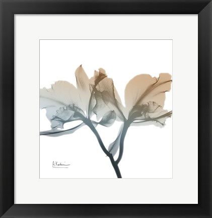 Framed Earthy Orchid Print