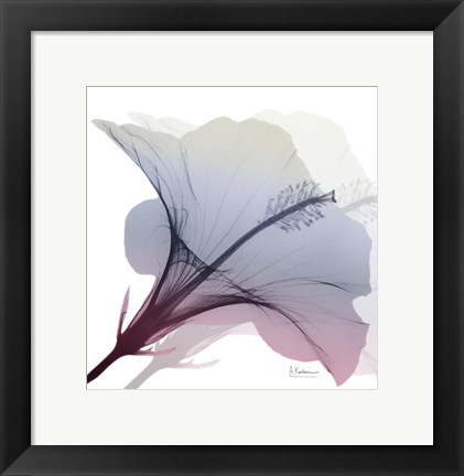 Framed Tasty Grape Hibiscus 2 Print