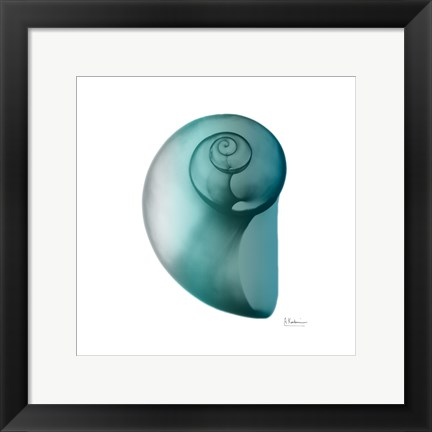 Framed Teal Water Snail 2 Print