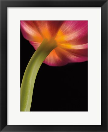 Framed Glowing Tulip Print