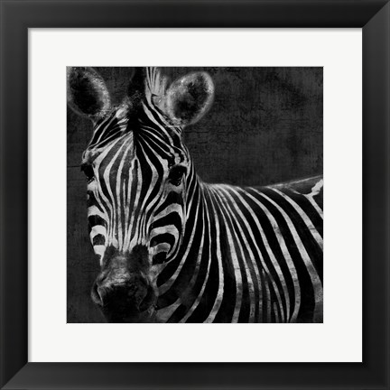 Framed Zebra Black And White Print
