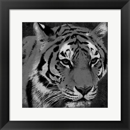 Framed Tiger Black And White Print