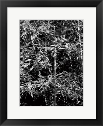 Framed Beach Foliage 1 Print