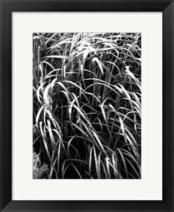 Framed Beach Foliage 7 Print