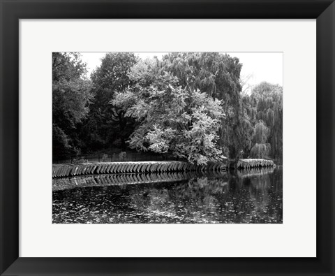 Framed Central Park Feather H Print