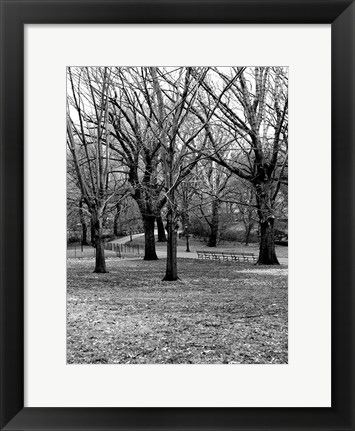 Framed Central Park Image 013 Print