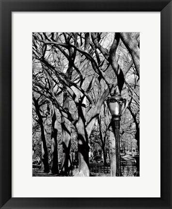 Framed Central Park Forest Print