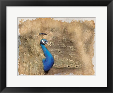 Framed Antique Peackock 2 Print