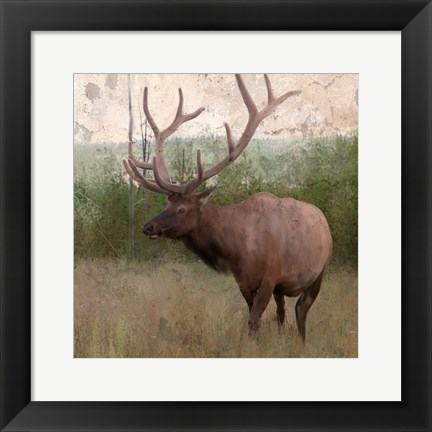 Framed Elk Stride Print