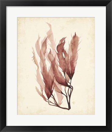 Framed Watercolor Sea Grass IV Print