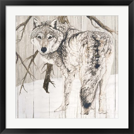 Framed Wolf in Woods on Barn Board Print