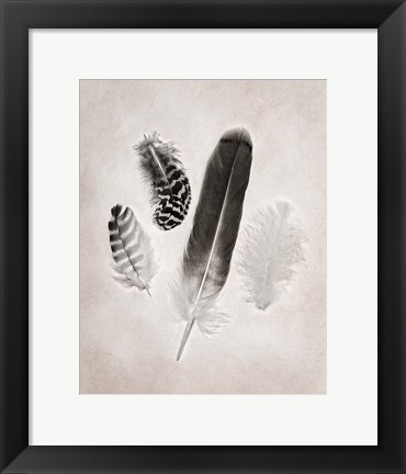 Framed Feather Group I BW Print