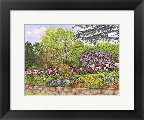 Framed Tulips Dancing In The Breeze Print