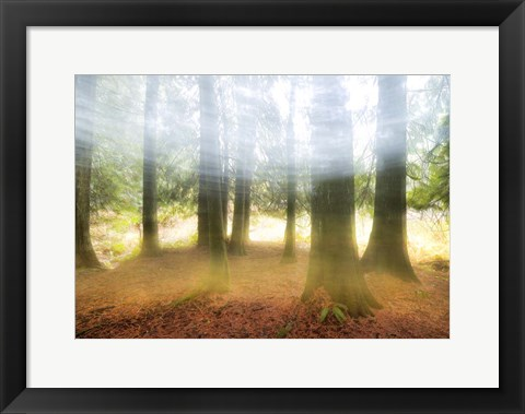 Framed Blurred Trees Print