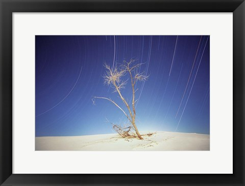Framed Bright Cottonwood Drum Print