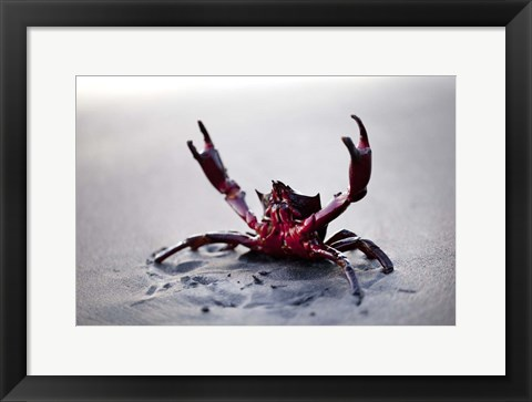 Framed Claws Up Print