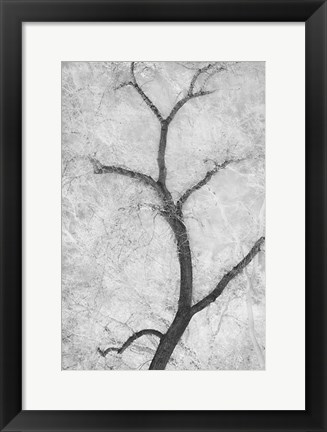 Framed Cottonwood Form Print