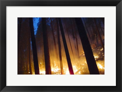 Framed Burning Forest Print