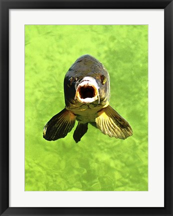 Framed Fish Print