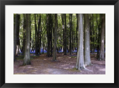 Framed Bluebell Wood Print
