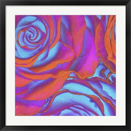 Framed Pink Orange Blue Roses Print