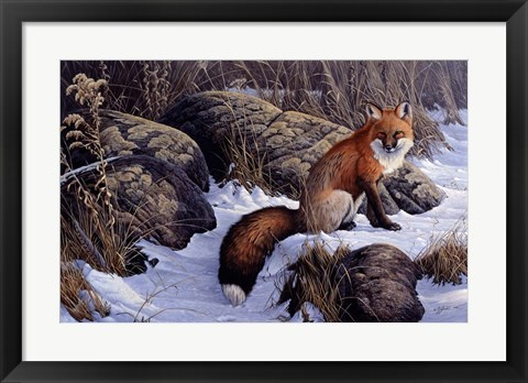 Framed Mid Winter Pause - Red Fox Print
