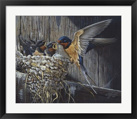 Framed Country Living  - Barn Swallows Print
