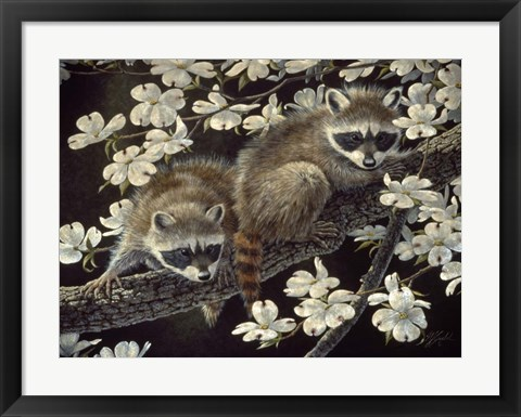 Framed Dogwood Hideout - Young Raccoons Print