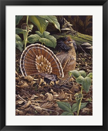 Framed May Display - Ruffed Grouse Print