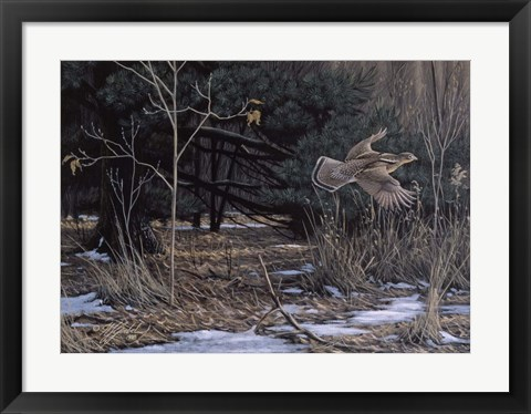 Framed Grouse On The Wing Print