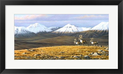 Framed Time Passages Mountain Caribou Print