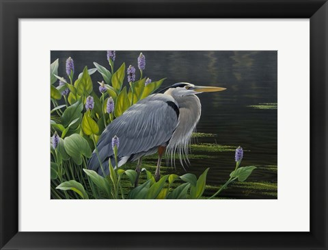 Framed Biding Time Great Blue Heron Print
