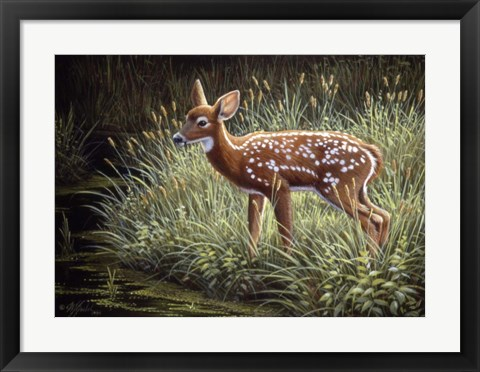 Framed In The Tall Grass Print